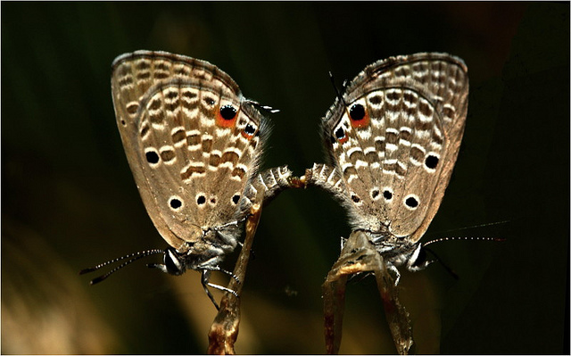 Real Live Butterflies